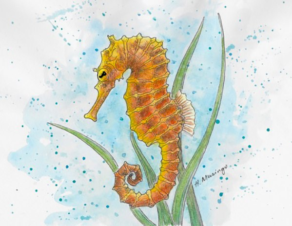 #WorldWatercolorGroup - Watercolor by Heather Musingo of seahorse - #doodlewash