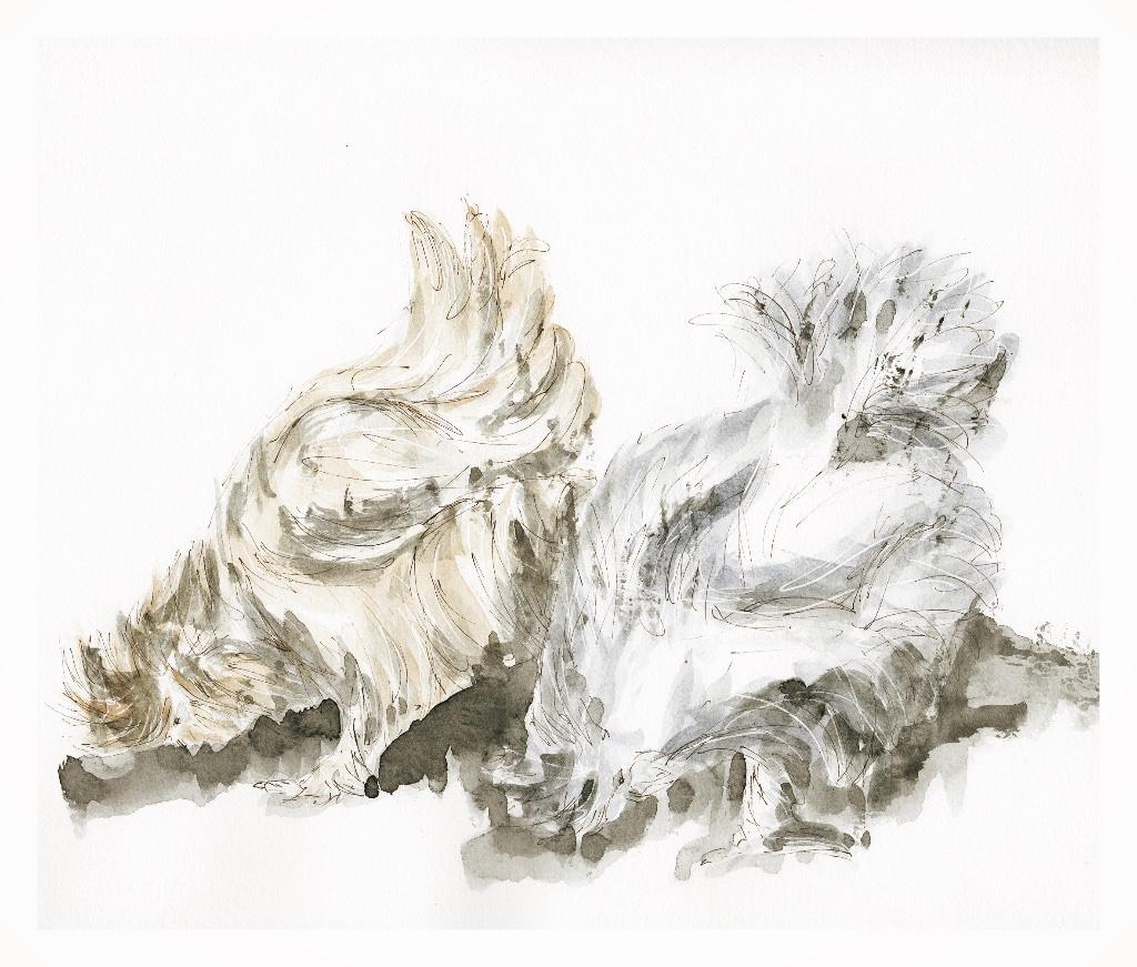 #WorldWatercolorGroup - Watercolor illustration by Patricia Mellett Brown - silkies - #doodlewash