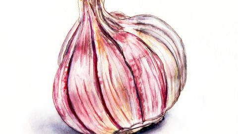 Day 22 - #WorldWatercolorGroup - Bumpy Purple Garlic Cloves - #doodlewash