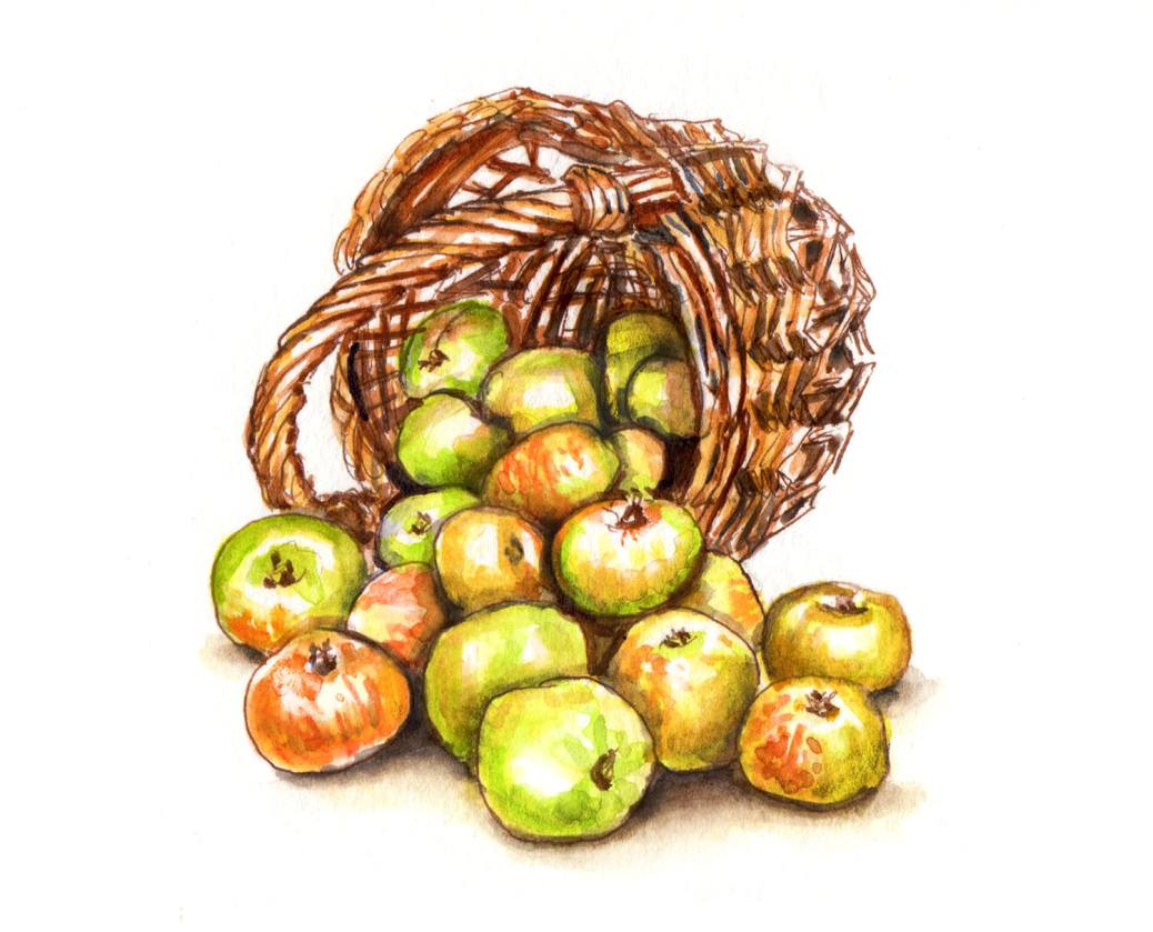 Day 28 - #WorldWatercolorGroup - A Basket of Apples Green And Red watercolor - #doodlewash