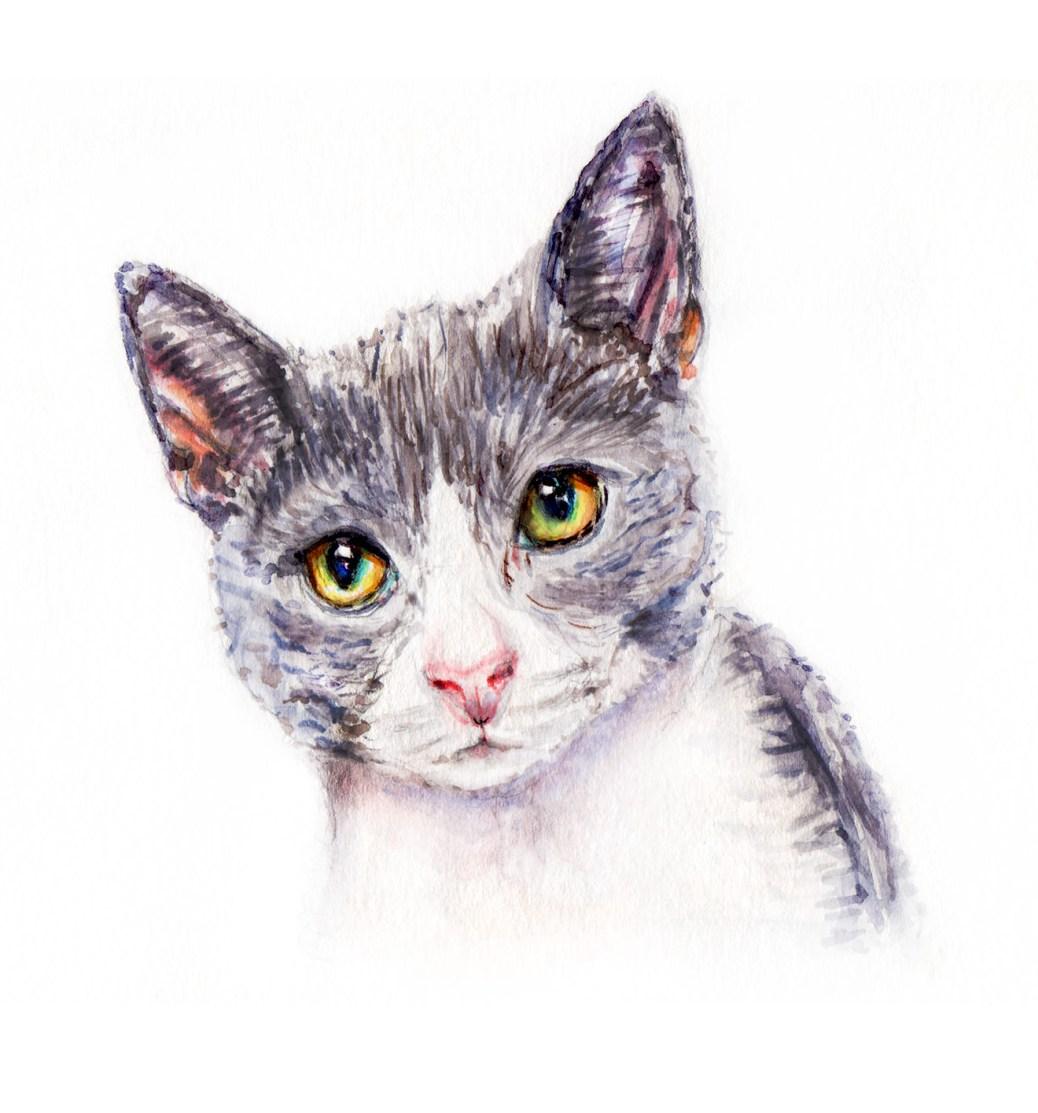 Day 6 - #WorldWatercolorGroup - Furry Animals Gray Cat Watercolor - #doodlewash