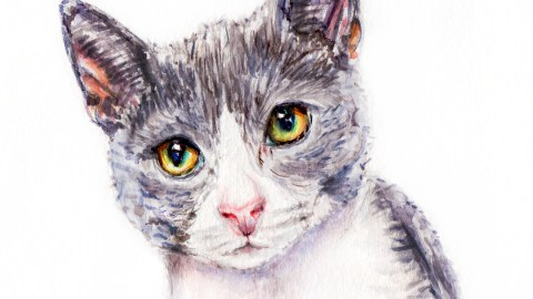 Day 6 - #WorldWatercolorGroup - Furry Animals Gray Cat Watercolor - #doodlewash
