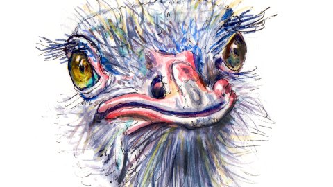 Day 8 - Feathered Freinds Funny Ostrich Face Watercolor - #doodlewash