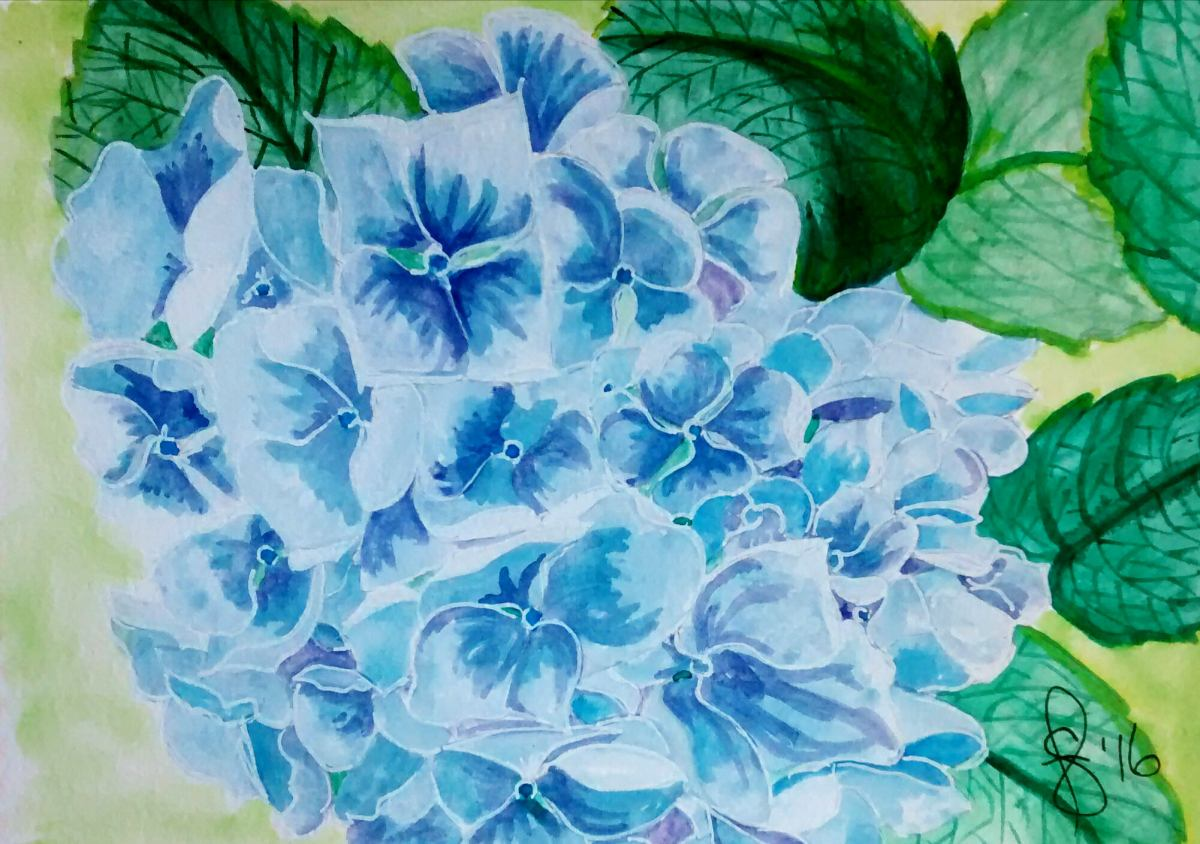 #WorldWatercolorGroup - Watercolor by Susan Feniak - Blue Hydrangea - #doodlewash