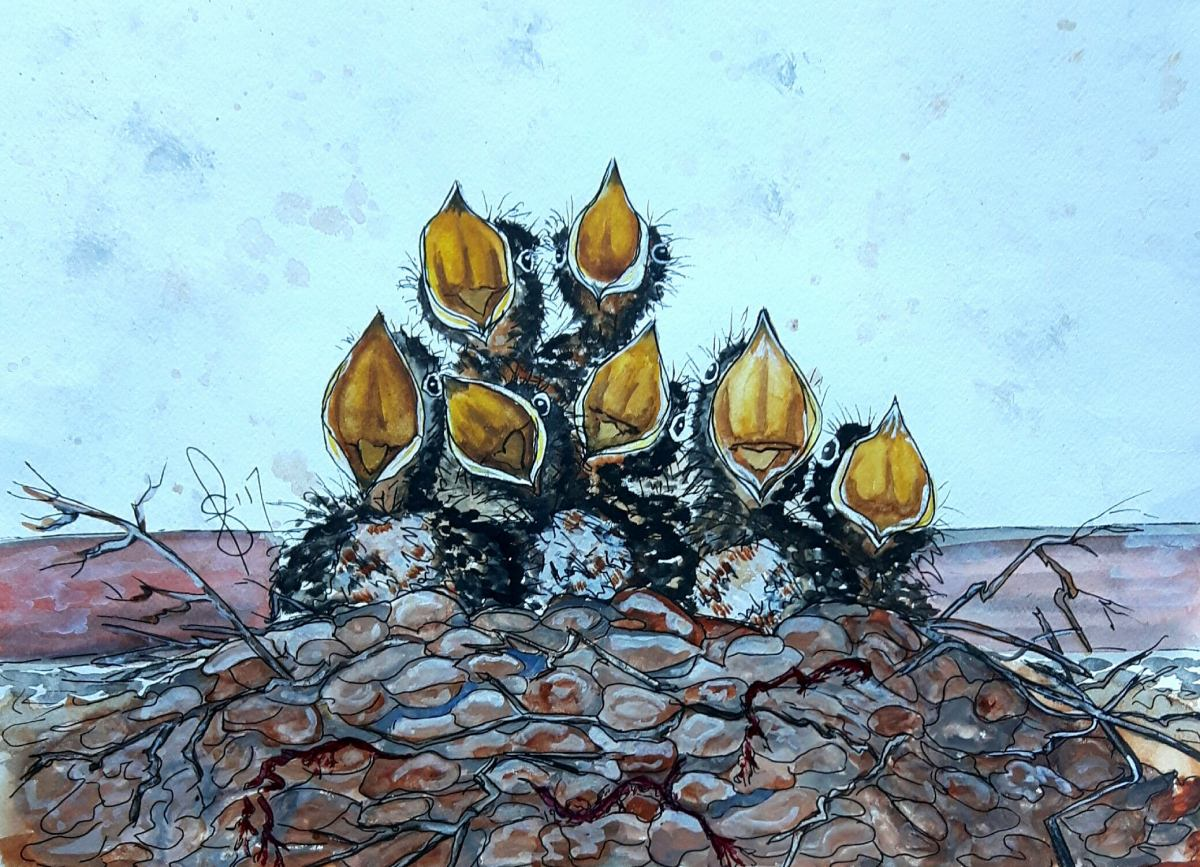 #WorldWatercolorGroup - Watercolor by Susan Feniak - Full House - baby birds in nest - #doodlewash