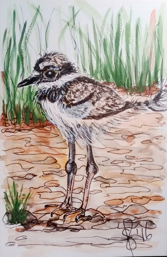 #WorldWatercolorGroup - Watercolor by Susan Feniak - bird - #doodlewash