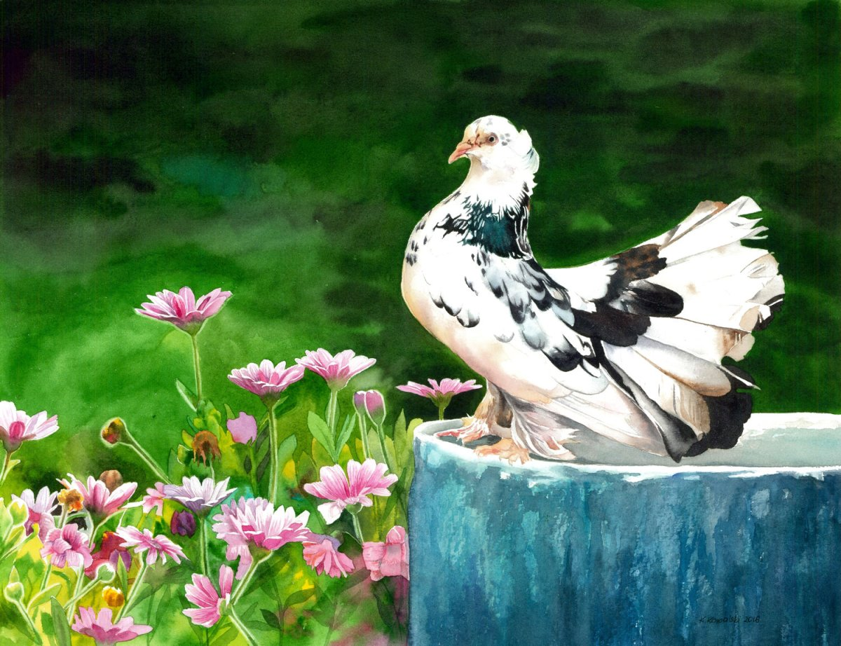 #WorldWatercolorGroup - Watercolor by Krzysztof Kowalski - The Indian Fantail Pigeon - #doodlewash