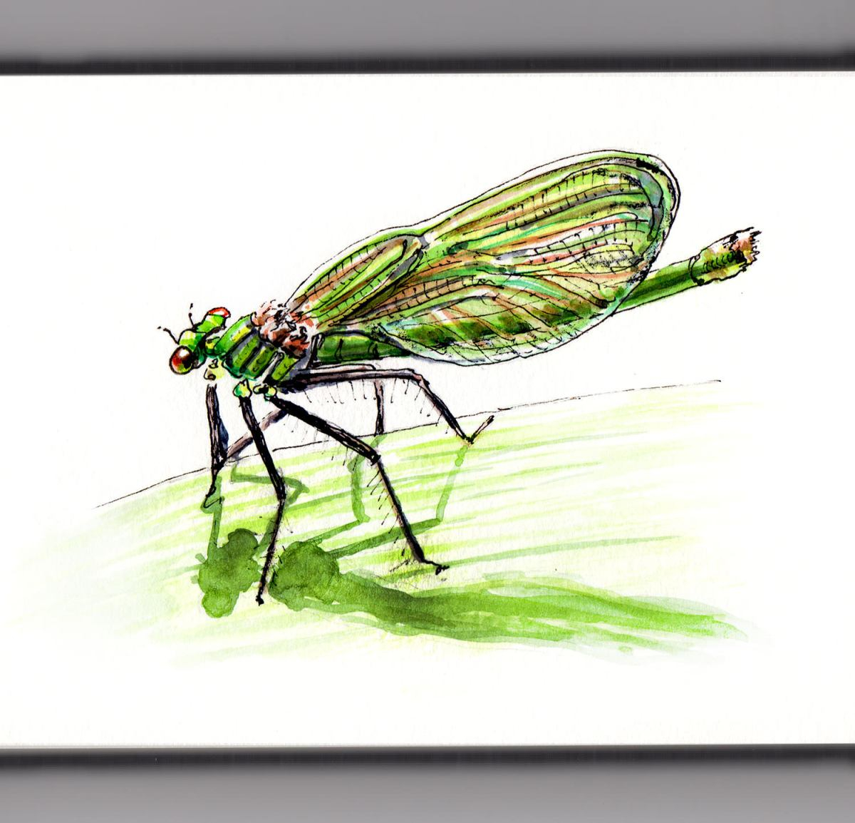 Day 26 - #WorldWatercolorGroup - A Dragonfly On A Leaf - #doodlewash