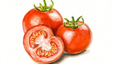 Day 3 - #WorldWatercolorGroup - Fresh Tomatoes Watercolor - #doodlewash