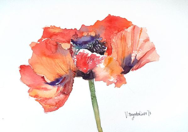 #WorldWatercolorGroup - Watercolor by Violeta Boyadzhieva - poppy flower - #doodlewash