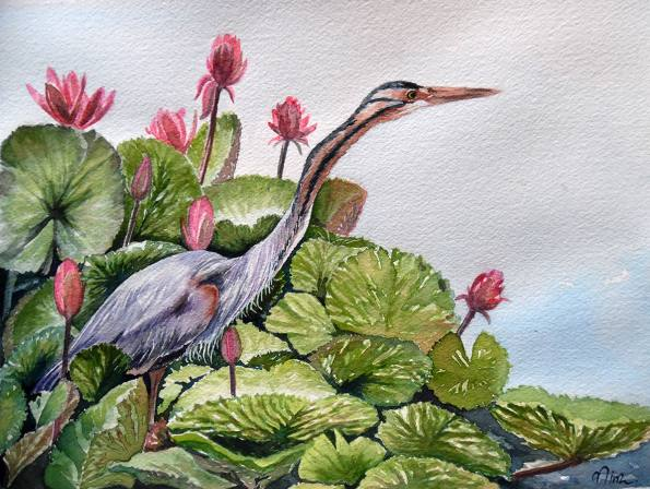 #WorldWatercolorGroup - Watercolor by Nimesha Udani - Purple Heron - #doodlewash