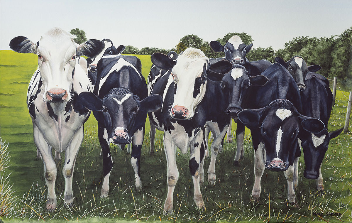 World Watercolor Month - Watercolor by Mark Garner - Curious - Cows - Doodlewash