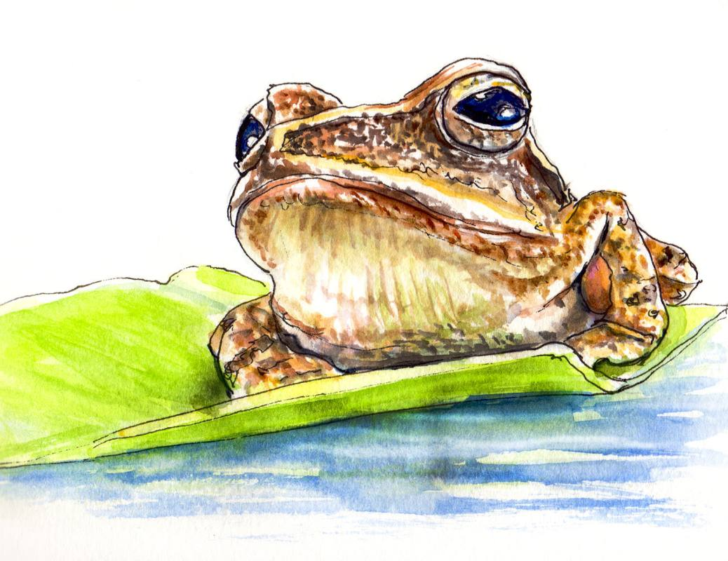 Day 12 - World Watercolor Month - Frog On Lily Pad Golden Evenings - Doodlewash