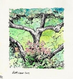 Day 22: Summer color in Maine. Thuya Gardens, Northeast Harbor. Watercolor and ink. SCAN0230
