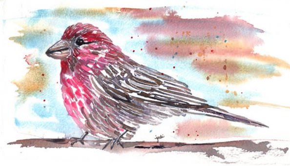 Purple Finch purple finch watercolor 1 5×10 140 lb saunders cold press