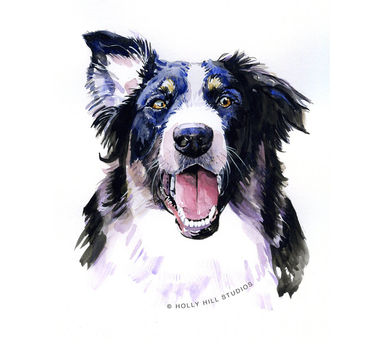 #WorldWatercolorGroup - border collie - Watercolour by Tim Olden - Doodlewash