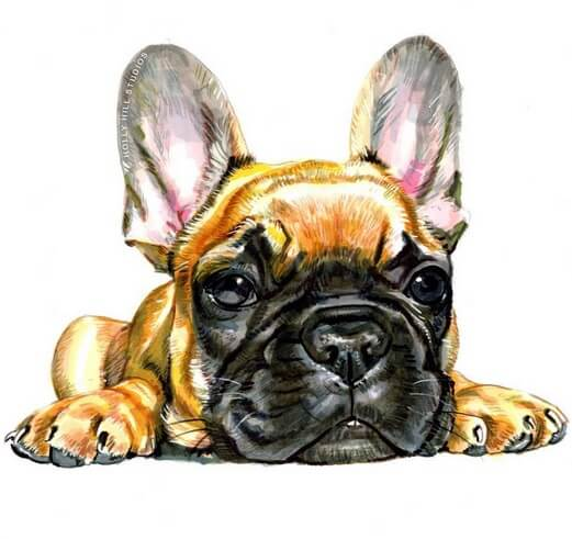 #WorldWatercolorGroup - French bulldog - Watercolour by Tim Olden - Doodlewash