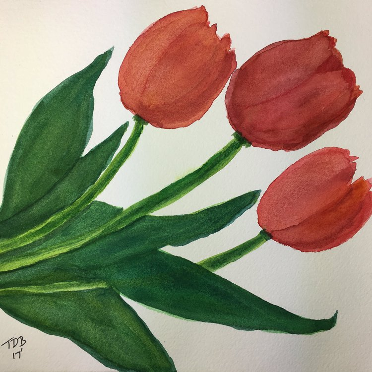 """8"""" x 8"""" inch watercolor. Tangled Tulips – 2017 #worldwatercolorgroup #tdbdraw #watercolor"""