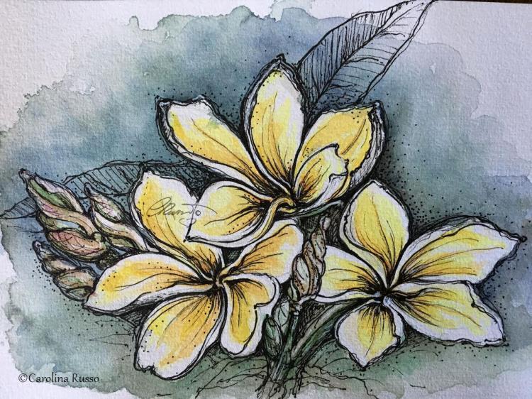 Plumeria – ©Carolina Russo Plumeria_s