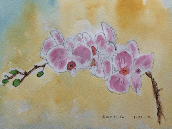 Phaelonopsis Orchid    8×11.5 in Screen Shot 2017-08-11 at 10.58.48 AM