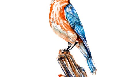 World Watercolor Group - Day 8 - My Favorite Bird - Eastern Bluebird - Missouri State Bird - Doodlewash
