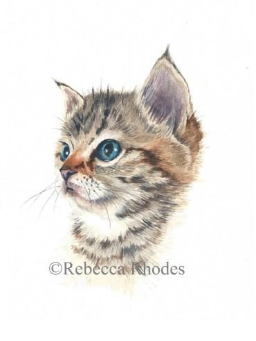 #WorldWatercolorGroup - Watercolor by Rebecca Rhodes - kitten - Doodlewash