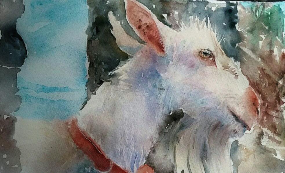 #WorldWatercolorGroup - Watercolor by Terhi Kalliola - Goat - Doodlewash
