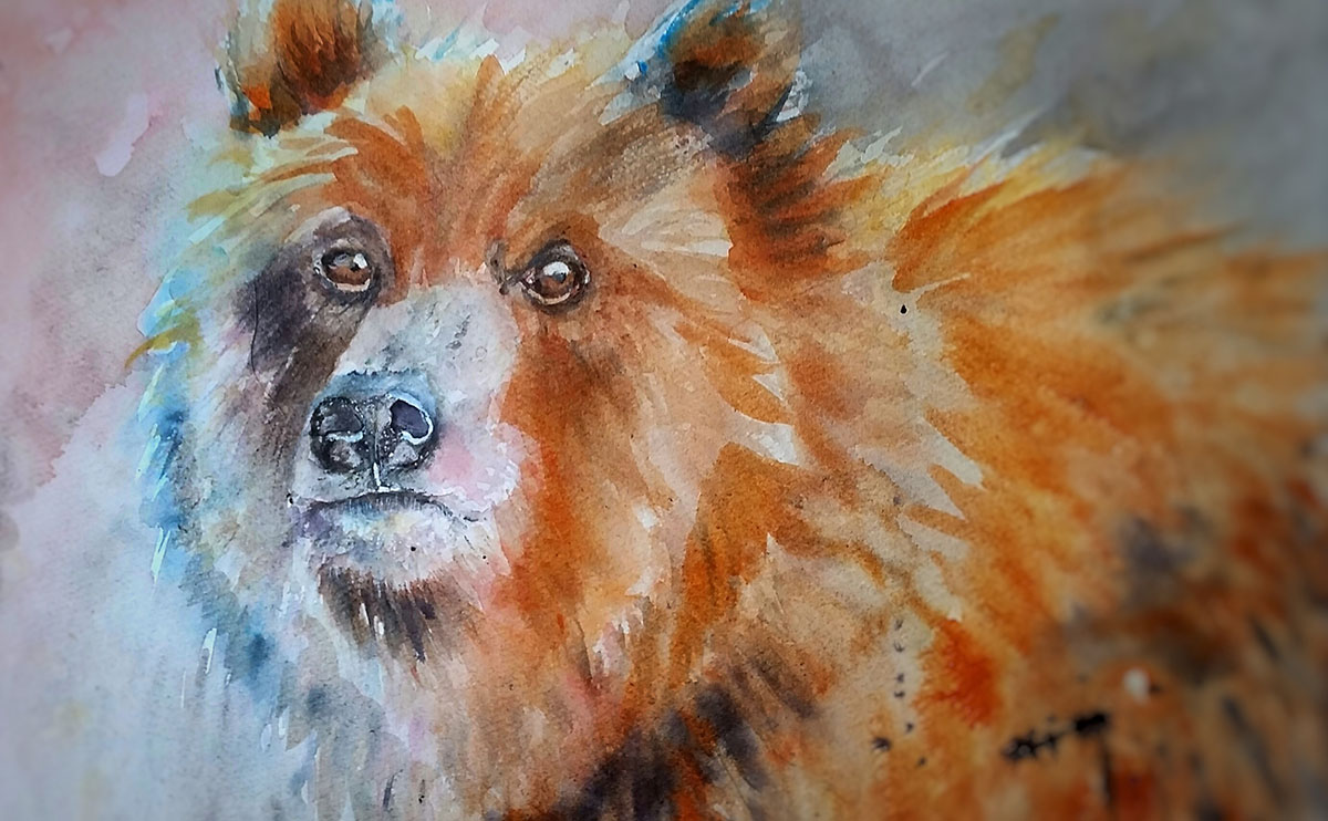 #WorldWatercolorGroup - Watercolor by Terhi Kalliola - Bear - Doodlewash