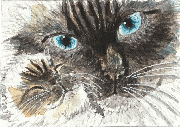 Ragdoll Siamese cats watercolor painting IMG_20170831_0001