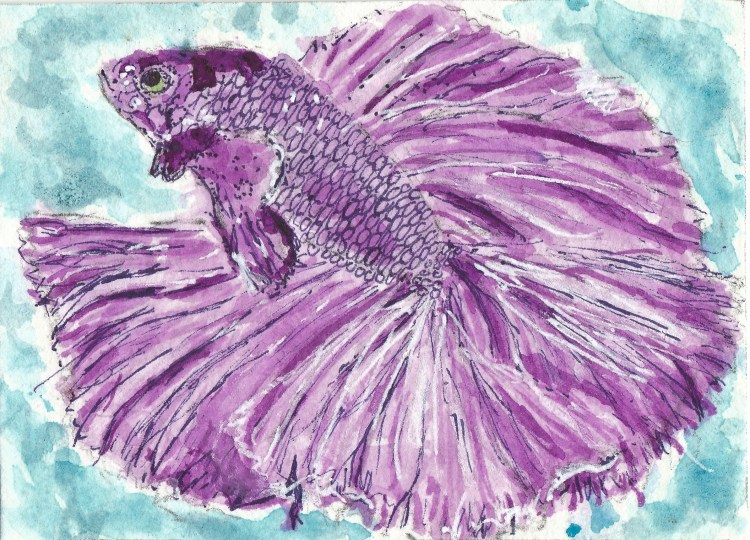 Purple Betta fish Siamese fighting watercolor aceo ]uhuhu