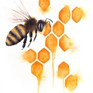 Honey Bee – Watercolor Print [8×10]