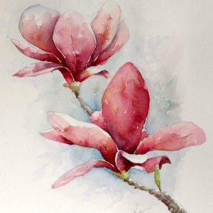 Magnolia – Original Watercolor