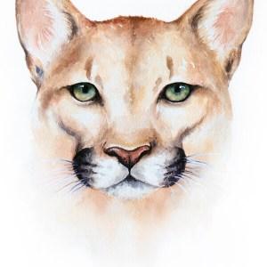 Mountain Lion – Watercolor Print [8×10]