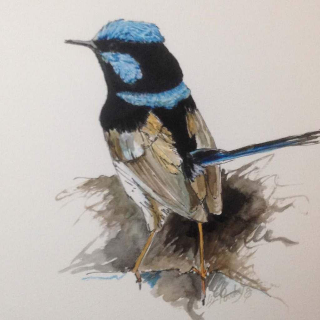 I painted this same blue wren in acrylic a few months ago so I thought it would be a good subject to