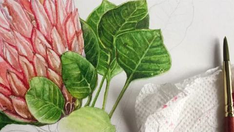 #WorldWatercolorGroup - Watercolor Botanical Painting Tutorial - Saswati Misra - Doodlewash