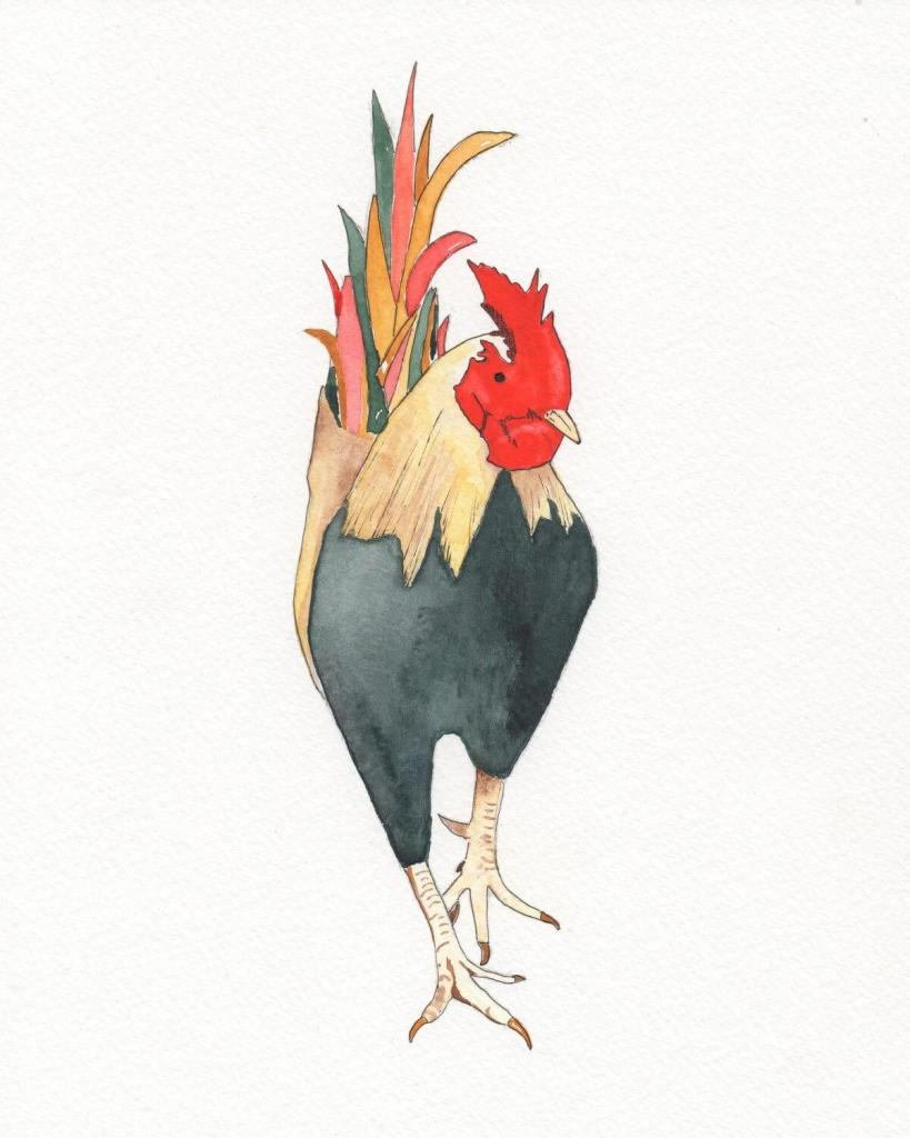 """""""Rooster"""" img064"""