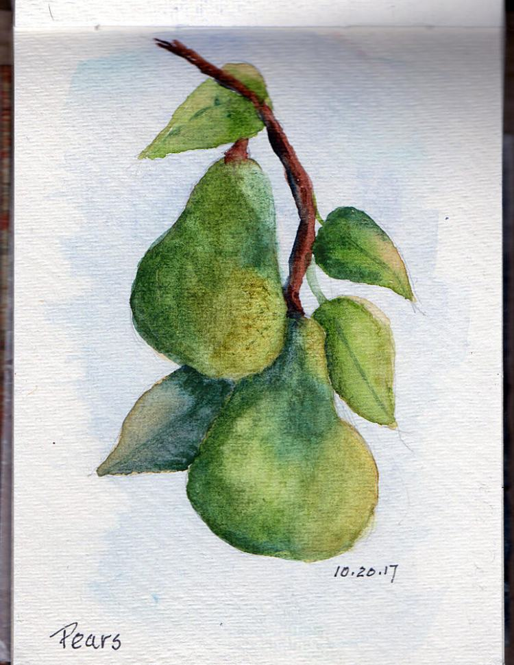 10.20.17 Pears – not quite ripe -from a photo taken at a friend\'s house. img139