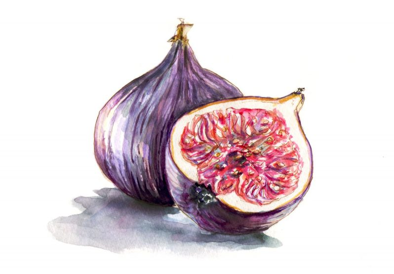 Day 1 - Figs
