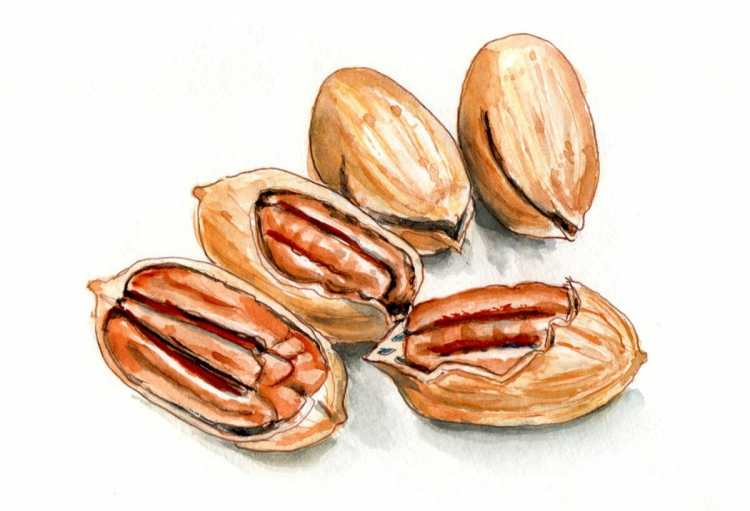 Test Day 10 – A Handful Of Pecans