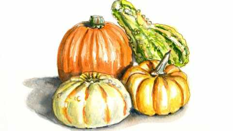 #WorldWatercolorGroup - Day 28 - Assorted Squash - Doodlewash