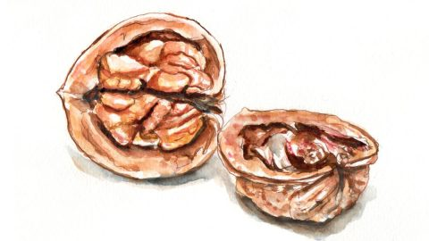 #WorldWatercolorGroup - Day 29 - Walnut A Bit Nuts - Doodlewash