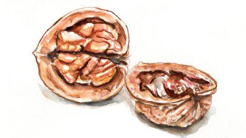 #WorldWatercolorGroup - Day 29 - Walnut A Bit Nuts - Doodlewash
