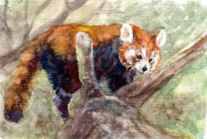 Getting a headstart on hubby's lunchbag paintings. Red Panda, aka the Lesser Panda, or possibi