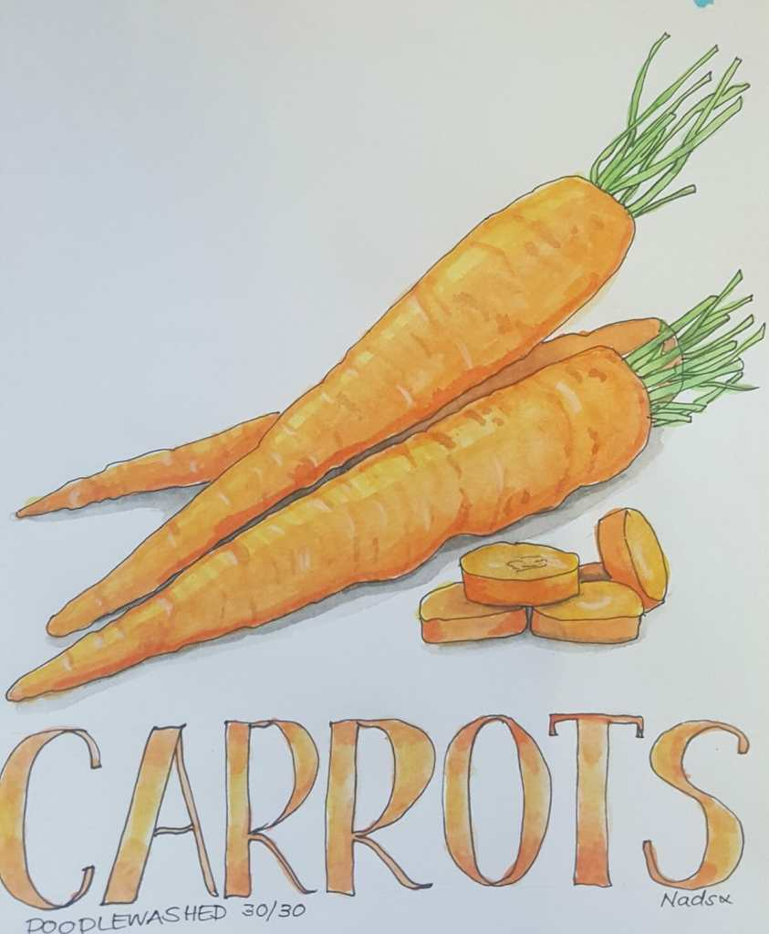 CARROTS ~ 30/30 and so ends @doodlewashed November food sketch challenges! I've loved the colo