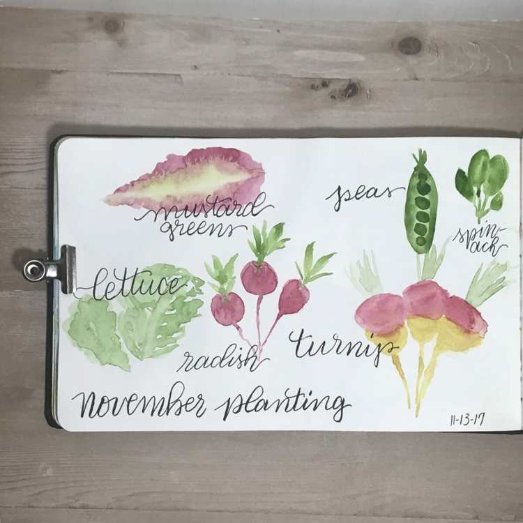 I love to visit the farmer's market in my town. These are doodles of plants that we are able t