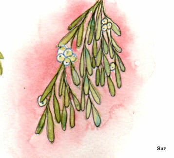 #WorldWatercolorGroup December Challenge Day 15: Mistletoe Just a quick, wee sketch today Scan-001
