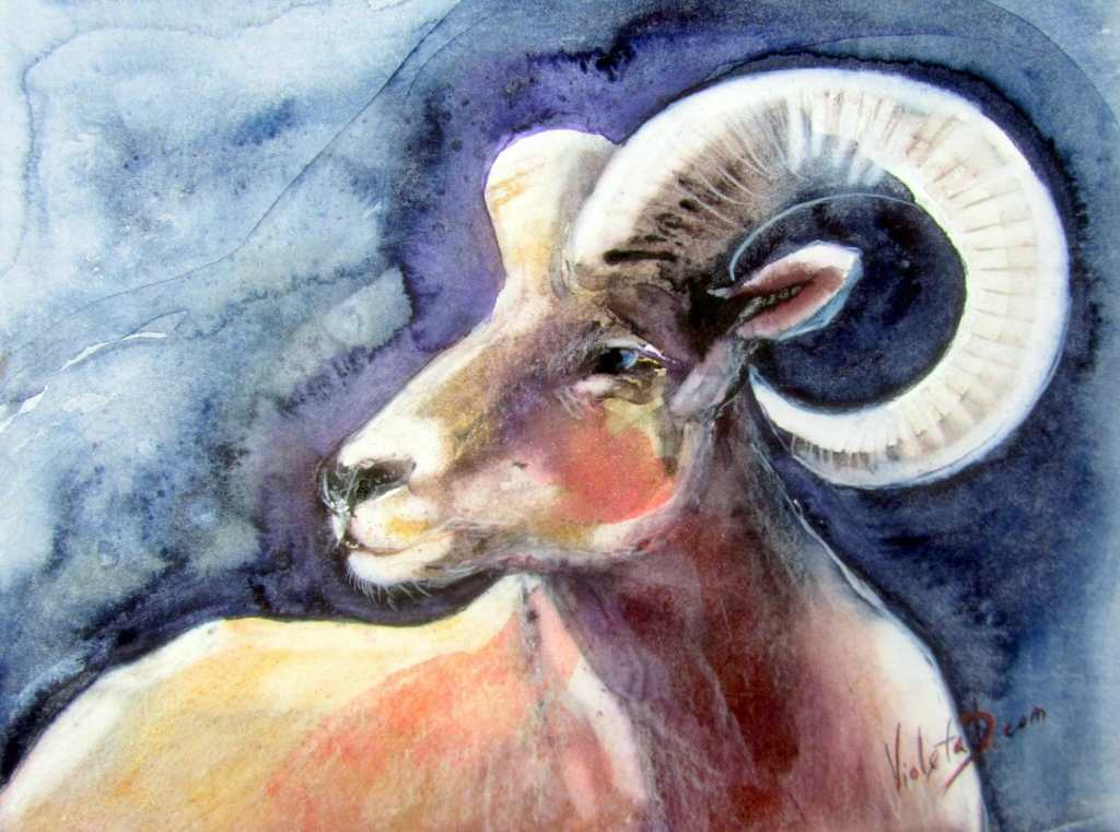 Bighorn Sheep, watercolor on Hahnemühle 425 gsm, 30×40 cm (painted in January 2018; for more: