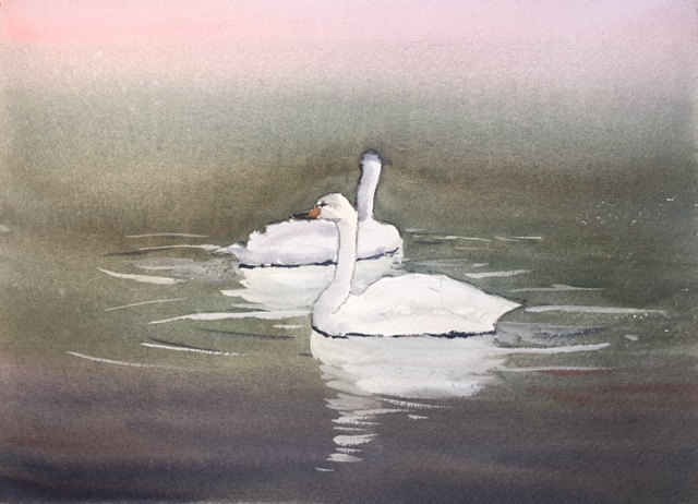 Swans. image1-2