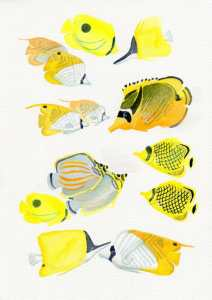 Butterflyfish of French Polynesia, watercolour tahaa420