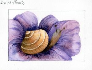 2/11/18 Snail 2.11.18 Snails img369